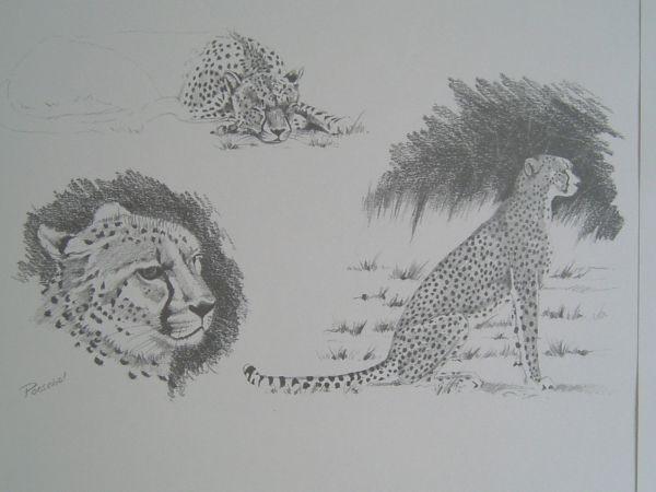Kunstdruckmappe 'Afrikanische Impressionen' - Helmut Poeschel